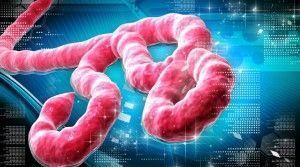 ebola-has-killed-69-guinea-january-2